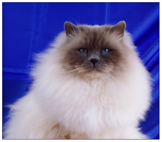 Peloux Leonardo De Cat